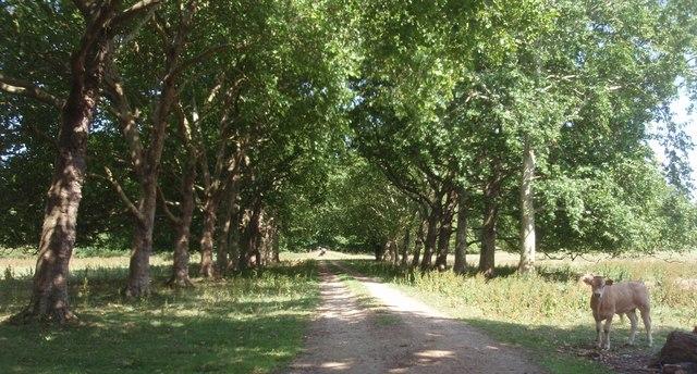 Track to Shillingthorpe Park