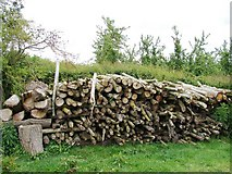 SO3656 : Log pile by Ian Paterson
