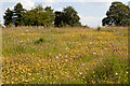 SU5029 : Wild Flowers upon Magdalen Hill by Peter Facey
