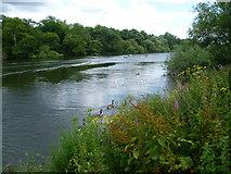 TQ1672 : The River Thames seen from Radnor Gardens by Marathon