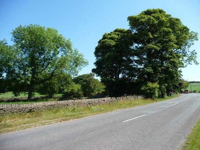 Trees alongside Thorncliff Green Road