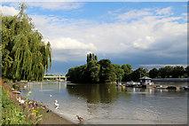 TQ1977 : River Thames near Kew Bridge by Christine Matthews