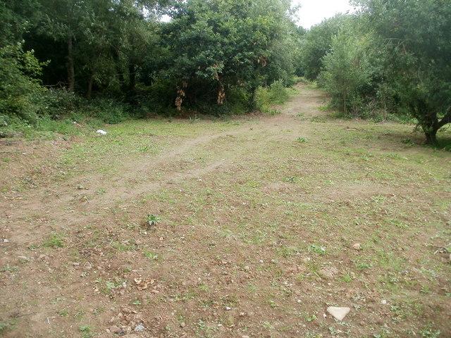A track through woods, Caerleon