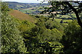 SS9443 : Wootton Common: view down combe off the hill by Christopher Hilton