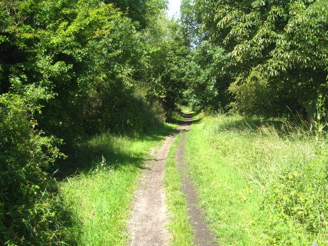 The Thames Path at Dorney Reach