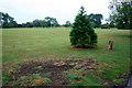 SK4833 : Small big tree by David Lally