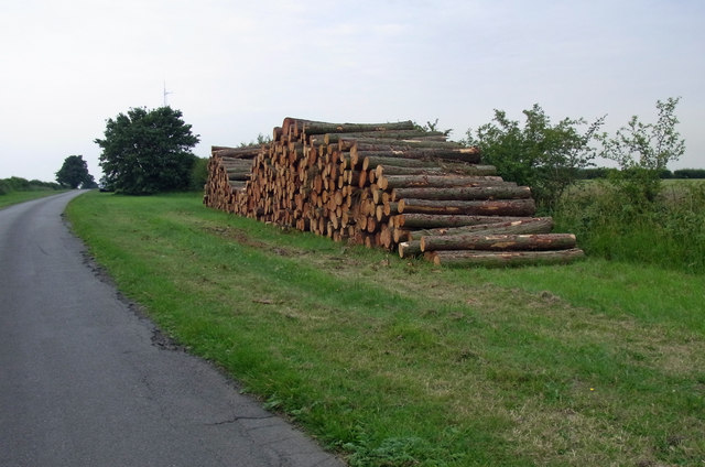 Timber Stack on National Cycle Route 1
