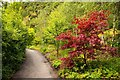 SX0554 : Path past trees in the Eden Project by Steve Daniels