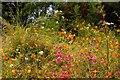 SX0554 : Californian wildflowers in the Mediterranean Biome by Steve Daniels