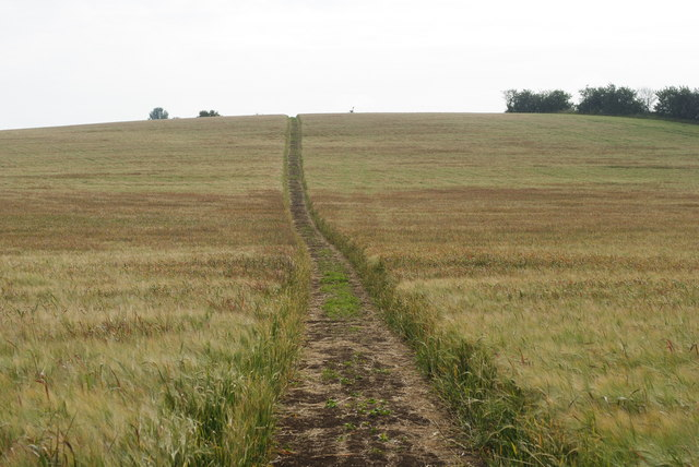 Clear cut path