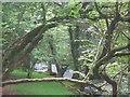 SH5059 : Coed ar lan Afon Gwyrfai 3 / Trees along Afon Gwyrfai 3 by Ceri Thomas