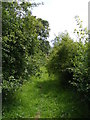 TM3770 : Footpath to New Road by Adrian Cable