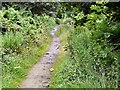 SJ9594 : Cat on Trail by Gerald England