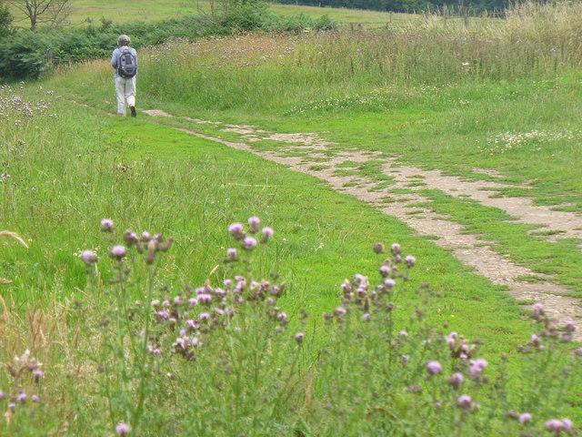 Greensand Way Near Dungate's Farm