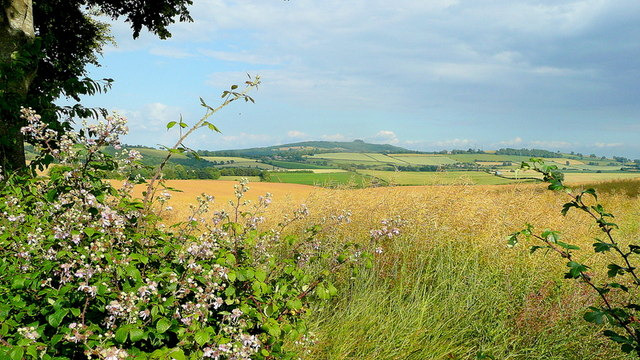 May Hill through the hedgerow