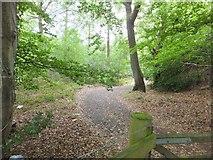 SY0284 : Path through Big Wood by David Smith