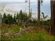 J3630 : Cleared forest land in Donard Wood by K.M.Jones