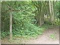 TQ2152 : North Downs way at Dawcombe Wood by Colin Smith