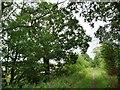 SE4417 : Oak tree on Tan House Lane footpath by Christine Johnstone