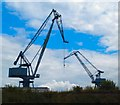NS3075 : Swans and Cranes by Andy Farrington