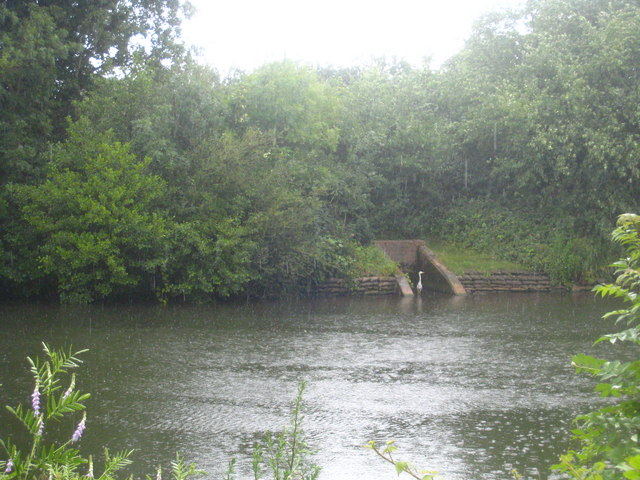 A heron in pouring rain on Desborough Island