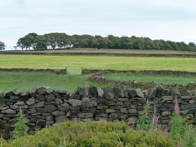 Dry stone walls east of Black Moor Road