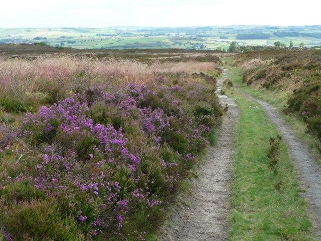 Footpath to Ryecroft