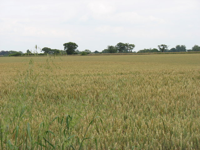 A large field west of Acton Turville