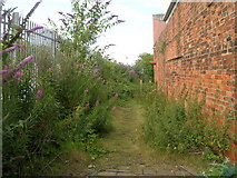 TA0827 : Overgrown footpath near Albert Dock, Hull by JThomas