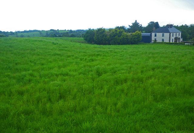 irish country home beside high grass     u00a9 c michael hogan