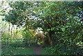 TQ8116 : Gate, 1066 Country Walk by N Chadwick
