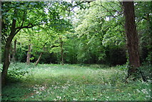 TQ2372 : Putney Heath, Wimbledon Common by N Chadwick