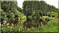 J3370 : Himalayan balsam, River Lagan, Belfast by Albert Bridge