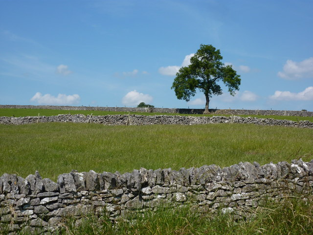 Tree, dry stone walls and fields