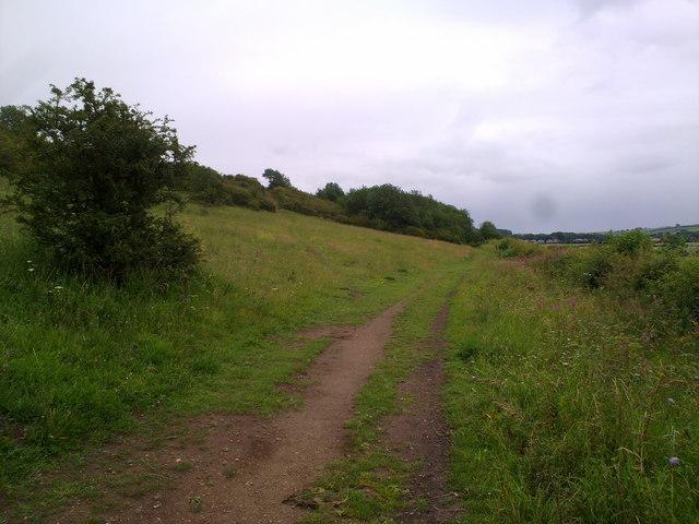 Limestone grassland near Sherburn