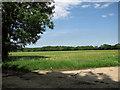 TM4078 : Barley field near Upper Holton by Evelyn Simak