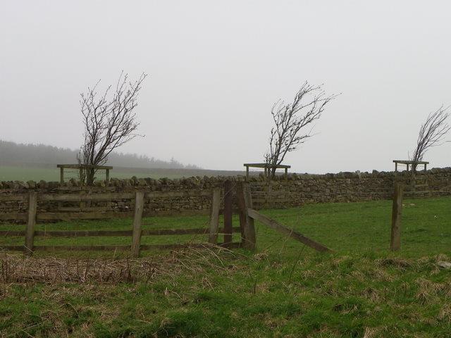 Drystone wall near Woodland