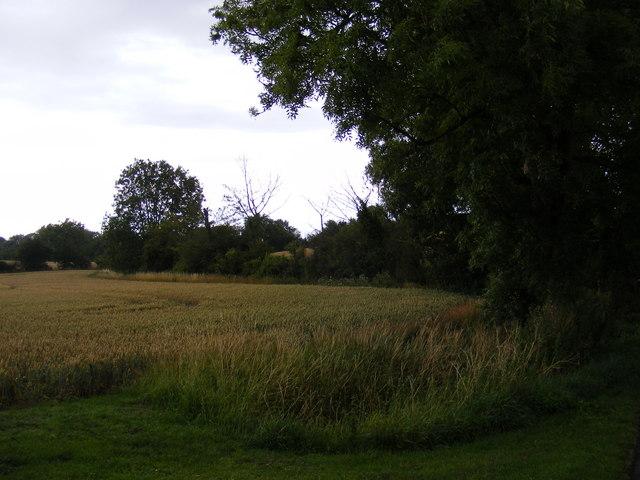 Footpath to Hill Farm & the C234 & Wood Farm