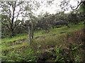 SJ9056 : Gorse bushes by Jonathan Kington