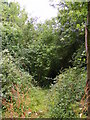 TM4265 : Footpath to Harrow Lane by Adrian Cable