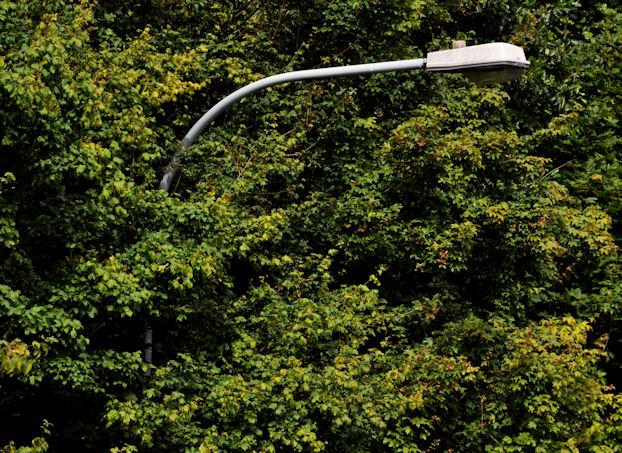 Streetlight and trees, Belfast