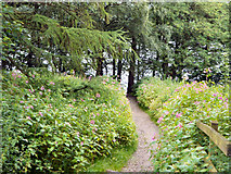 SD7217 : Path to the Reservoir by David Dixon