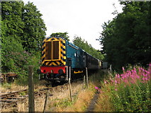 SO6302 : Dean Forest Railway: near St. Mary's Halt by Gareth James