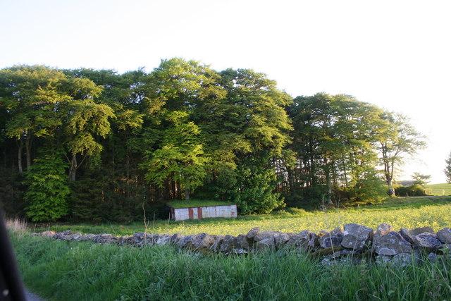 Raxton Wood