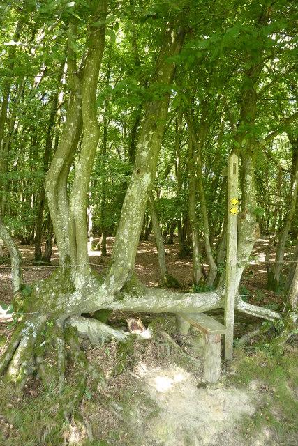 Stile into Warr's Wood