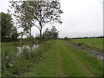 N5632 : Grand Canal in Ballybrittan, Co. Offaly by JP