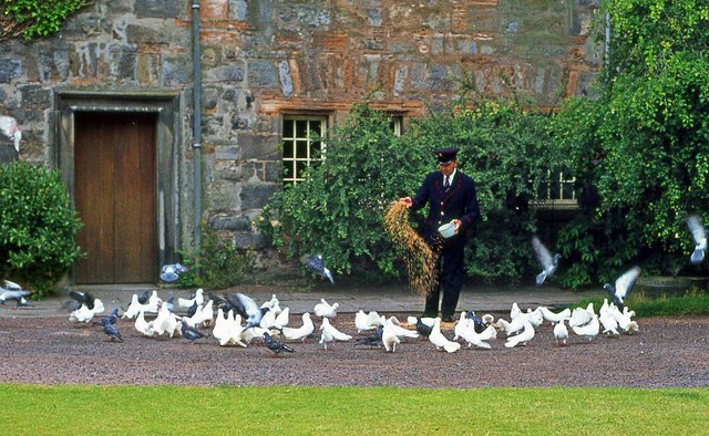 Feeding the doves of St. Mary's College, South Street, St. Andrews