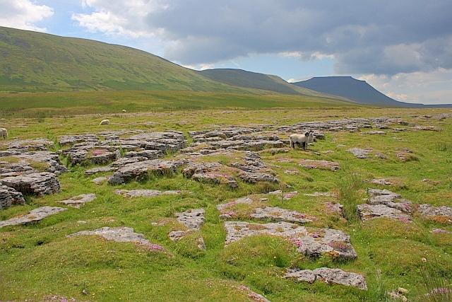 Limestone Outcrops, Fell Close Rocks