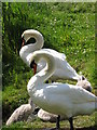 N6087 : Swans at Lough Ramor by Eric Jones