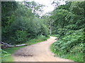 TQ4297 : Path in Epping Forest by Malc McDonald